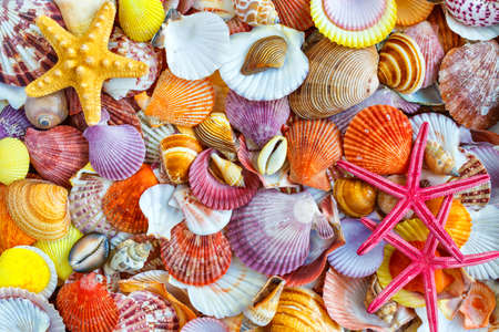 Seashells background, lots of amazing seashells, coral and starfishes mixed.Sea shells collected on the coast of Costa Rica as background