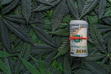 Roll of US dollar bills over the green cannabis leaves. Money and marijuana. Concept of business, medicine.Cannabis on a dollar background.