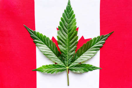 A Canadian flag with the maple leaf replaced by a marijuana leaf. Cannabis legalization in Canada.