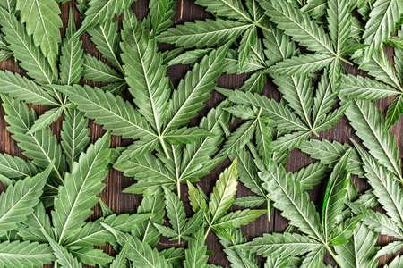 CBD Beautiful background green cannabis flowers.Cannabis Sativa Leaves On Dark - Medical Legal Marijuana
