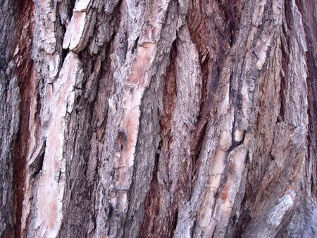 Close-up of bark on a tree Stock Photo