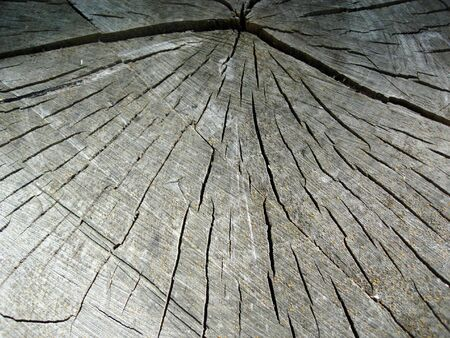 Cross-section of a cut tree