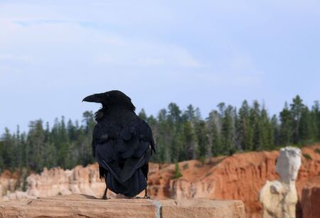 A crow perched on a rock overlooking a canyon