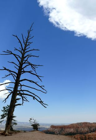 A large leaning tree at Bryce Canyon National Park Stock Photo