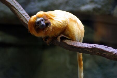 A monkey perched on a tree branch Stock Photo