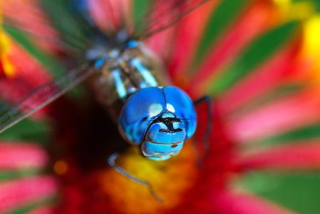 A close up of a brightly colored dragonfly