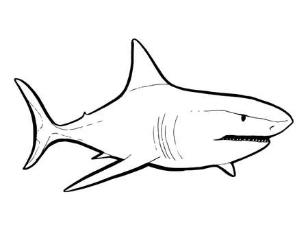 Predatory fish shark sketch illustration to engraving style Stock fotó - 110745489