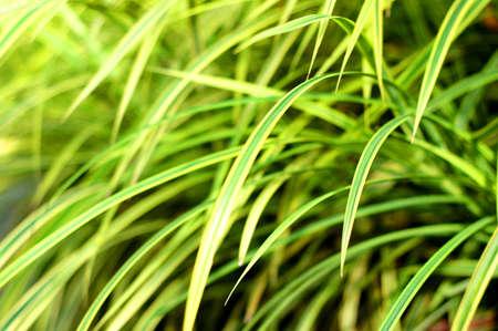 flora: Tropical flora Stock Photo