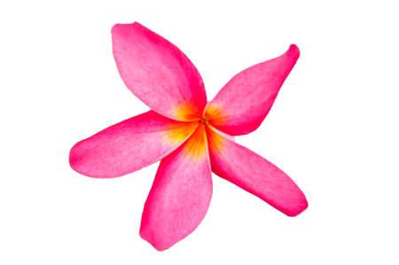 leelawadee: Plumeria Frangipani Lanthom Leelawadee flowers.  Stock Photo