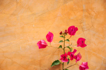 Colorful concrete wall and pink flower Stock Photo - 11964218