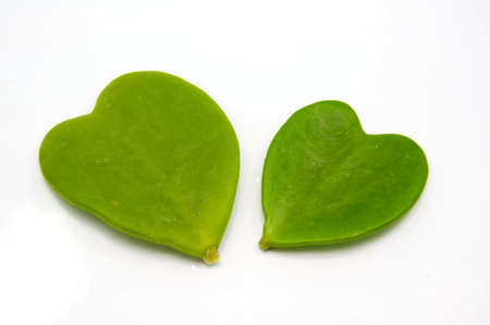 Heart shape frome  green leaves