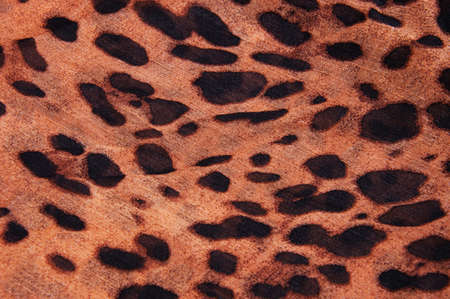Tiger fabric photo