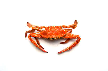 Hot Steamed Crabs isolate on white background photo