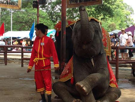 Elephant show at Ayutthaya Thailand