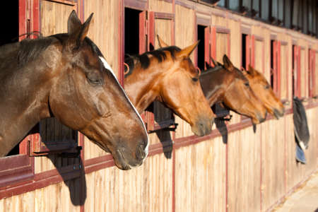 horse stable: Horses in their stable