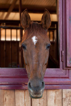Horse in the stable photo