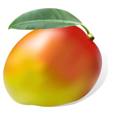 mango slice: ripe juicy sweet mango leaf one on striped background