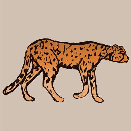 sneak: One handsome young cheetah sneak