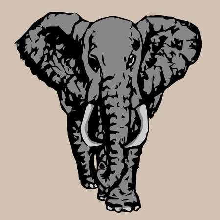 tusks: big gray elephant with white tusks fac