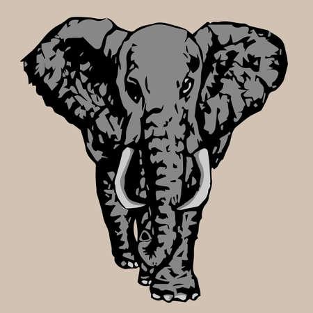 tusks: big gray elephant with white tusks fac