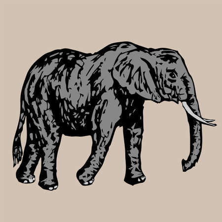 tusks: big gray elephant with white tusks side