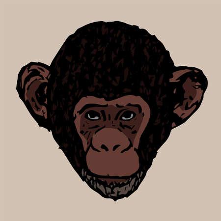 chimpances: cabeza Hermosa chimpanc�s j�venes Vectores