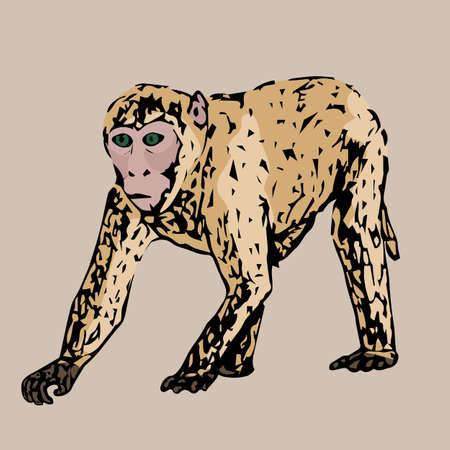 young: Running young beautiful monkey