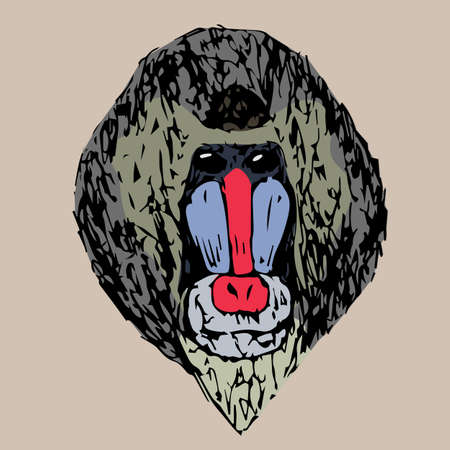 mandrill: the head of a young daboon mandrill on a background
