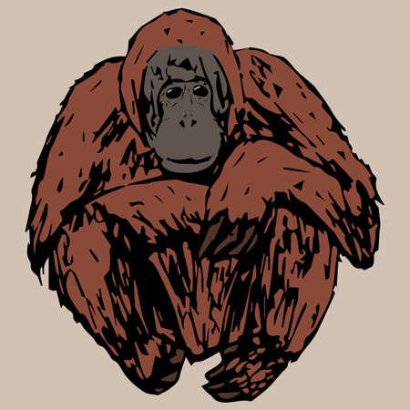 sedentario: orangután joven sedentaria sobre un fondo