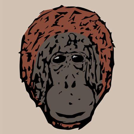 chimpances: cabeza Hermosa chimpancés jóvenes Vectores