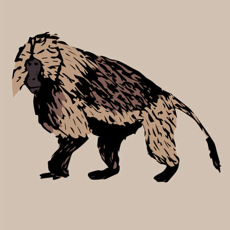 baboon: is a young strong on baboon gelada on cream color background Illustration