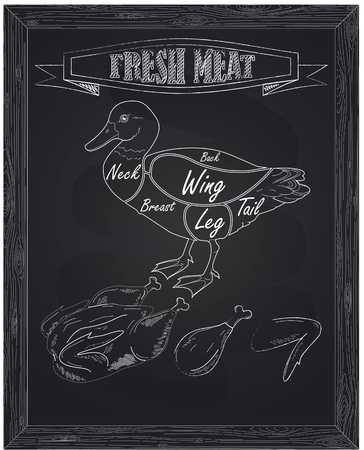 duck meat: young beautiful duck on a scheme and fresh meat drawn with chalk Illustration