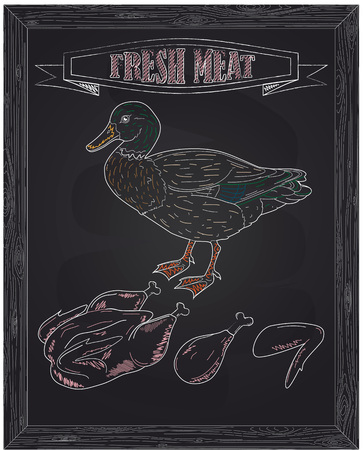 duck meat: young beautiful duck and fresh meat drawn with chalk Illustration