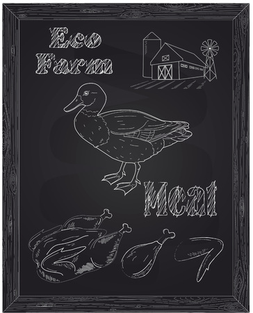 duck meat: young beautiful duck on a farm and eco meat drawn with chalk