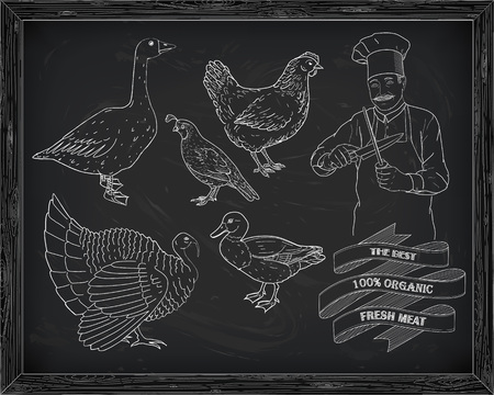 duck meat: beautiful hen quail turkey duck goose with chef drawn in chalk