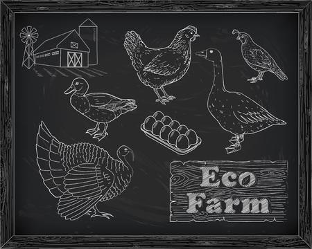 beautiful scheme cutting chicken turkey duck goose quail on the farm drawn in chalk
