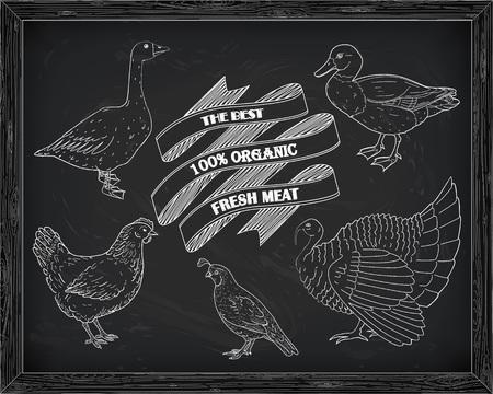 turkey hen: beautiful hen quail turkey duck goose quail drawn in chalk