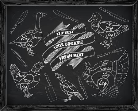 beautiful scheme cutting chicken turkey duck goose quail drawn in chalk