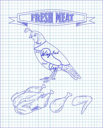 beautiful fresh quail and meat drawn in pen Ilustração