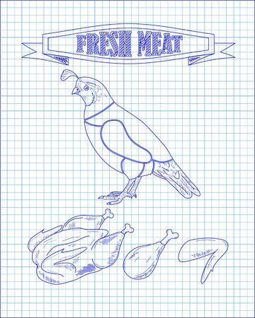 beautiful fresh quail and meat drawn in pen Ilustração