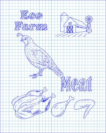 beautiful fresh quail and farm drawn in pen Imagens - 55279519