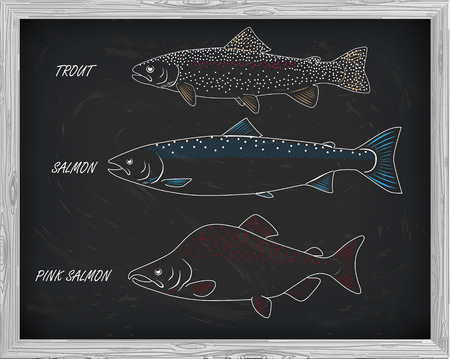 pink salmon: beautiful pattern of salmon, trout and pink salmon. With a drawing of white on a black background