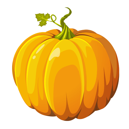 Pumpkin fresh orange butternut big autumn vegetable squash gourd.  closeup side view square Halloween Thanksgiving harvest icon sign postcard illustration isolated on white background. Illustration