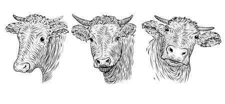 variation: Cow, calf, bull cute muzzle face in three different set collection variation emotions. horizontal black white sign icon  outline  illustration isolated, white background Illustration