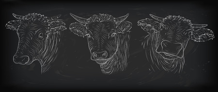 variation: Cow, calf, bull cute muzzle face in three different set collection variation emotions. horizontal black white sign icon  outline  illustration isolated, on chalkboard background Illustration