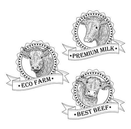 herding: Cow, calf, bull cute muzzle face set collection variation sticker icon label tag symbol text eco farm beef tape.  square sign outline black white illustration isolated white background