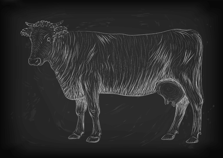 mammals: Cow, calf, bull cute muzzle animal mammals living full-length entire. vertical closeup side view outline chalk white sign nice signboard icon sketch illustration on black board background