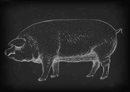 sow: Pig, swine, hog sow piggy piglet piggie pigling brawn boar grown big eco farm animal snout.
