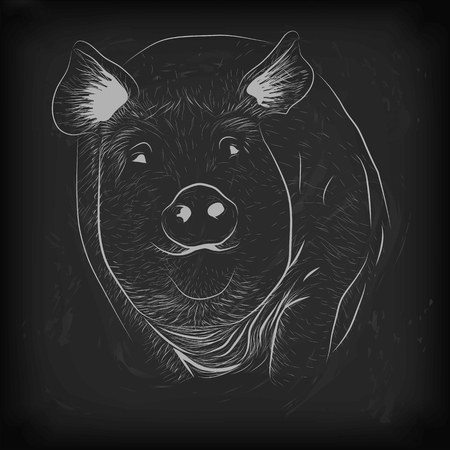 sow: Pig, swine, hog sow piggy piglet piggie pigling brawn boar grown big cute eco farm animal snout. Illustration