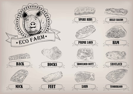 spare ribs: Pork pig side carcass cuts cut parts info graphics scheme sign signboard poster butchers guide back neck feet shoulder butt loin ham.  beautiful horizontal closeup black outline beige background Illustration